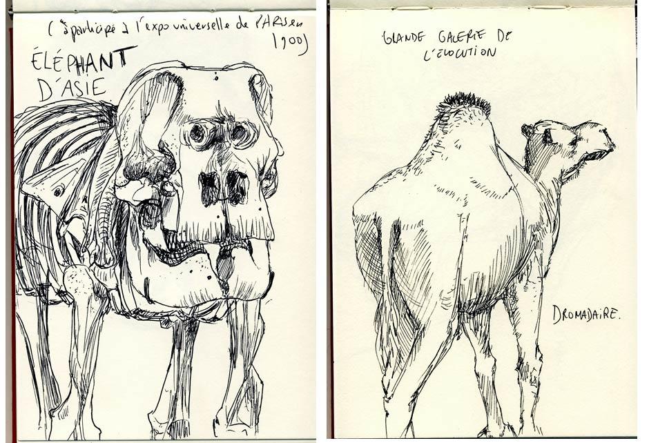 les squelettes de dinosaures à la galerie de paléontologie