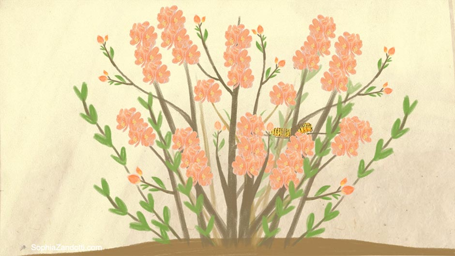 chenille ornement illustration zandotti illustration zandotti illustratrice freelance paris pastel vidéo illustrée