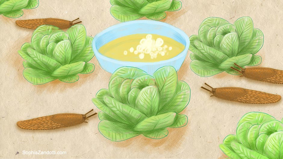limaces_salade_biere_illustration_zandotti illustration zandotti illustratrice freelance paris pastel vidéo illustrée