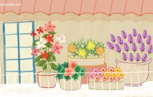 plantes_sobres_illustration_zandotti