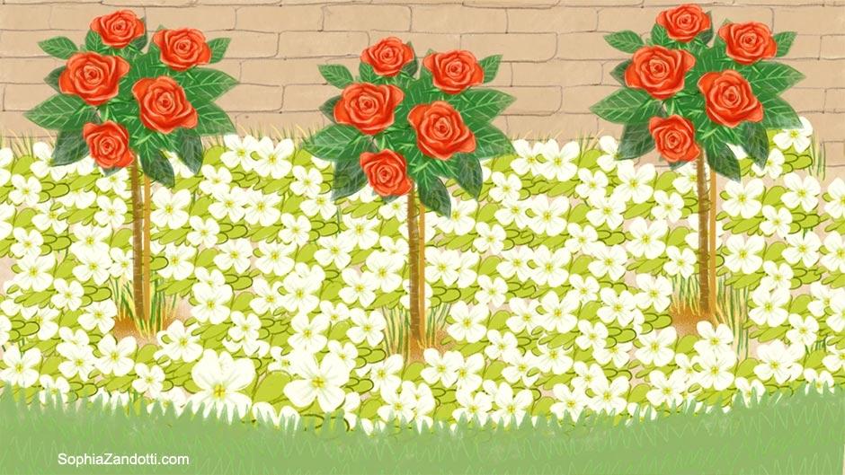 plantes_vivaces_rosiers_illustration_zandotti illustration zandotti illustratrice freelance paris pastel vidéo illustrée